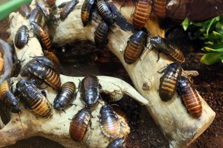 ¿Cómo eliminar una plaga de cucarachas?