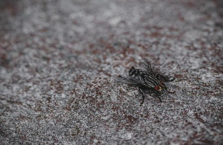 ¿Cómo acabar con los nidos de moscas?